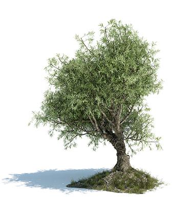 Azienda agricola costa panera il nostro territorio for Acquisto piante olivo